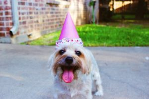 dog-with-his-birthday-party-hat-on