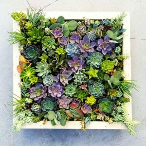 diy plant picture frame 1