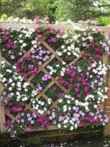 trellis-and-lattice-vertical-flower-garden