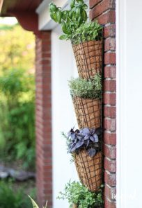 mesh and fibre plant holders fixed to a wall one above the other