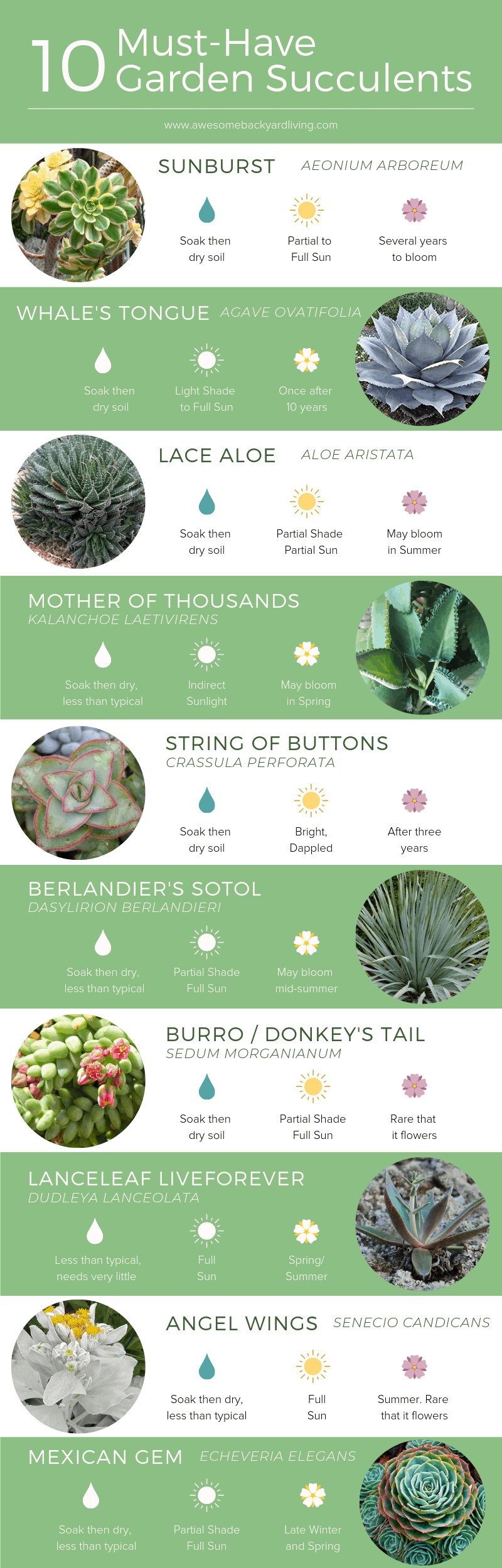 Succulents-Infographic 1