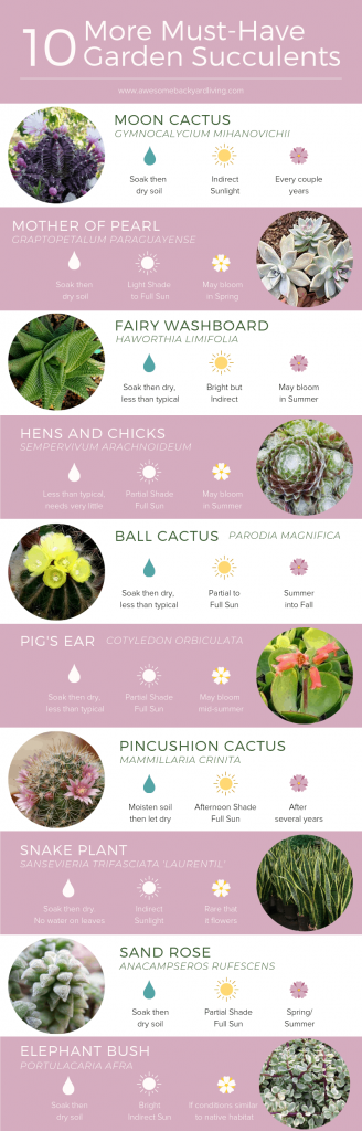 Succulents infographic-2