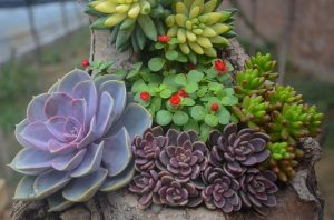 thick leaf succulents