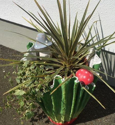 Spiky-plant-in-container.